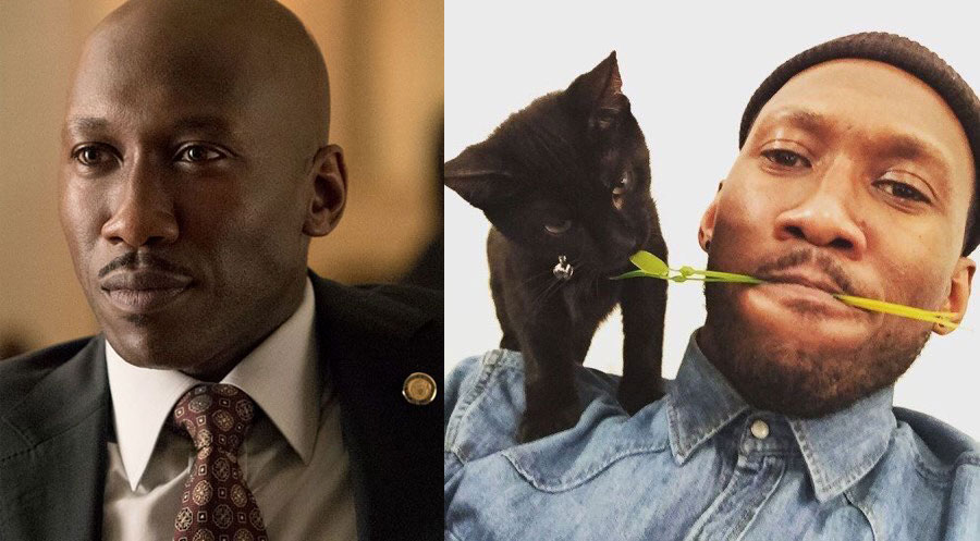 Mahershala Ali - Nas - cat