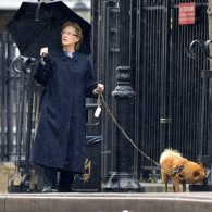 Meryl Streep's pet Long-haired Chihuahua (Meryl Streep)