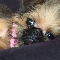 Octavia Spencer's pet Ethel