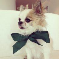 Vera Wang's pet Cooper