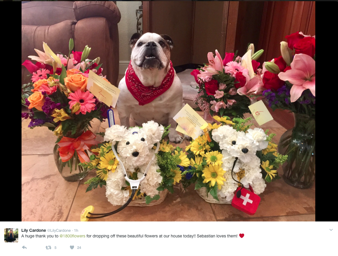 Dog Flowers - Sebastian get well soon