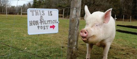 Esther the Wonder Pig - From Mini Pig to Mega Star