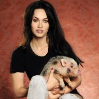 Megan Fox's pet Piggie Smalls