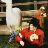 Michael Jackson's pet Livestock