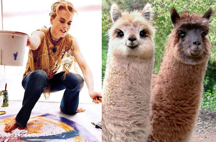 Nicole Kidman - Alpacas