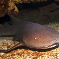 Lil Wayne's pet Nurse Sharks