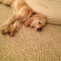 Oprah Winfrey's pet Sadie