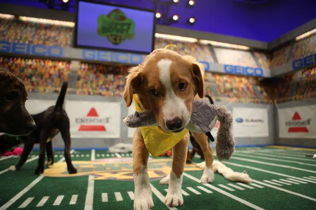 Puppy Bowl XII - Second Half