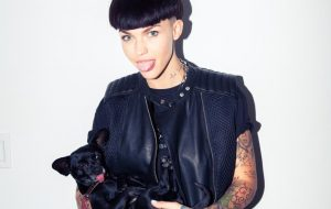 Ruby Rose - Chance - chihuahua