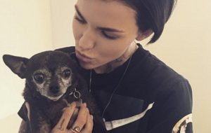 Ruby Rose - Chance - chihuahua instagram