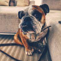 Steve Aoki's pet Coco the Dim Mak Dog