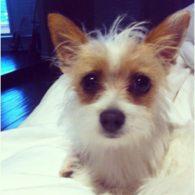 Tori Spelling's pet Mitzi