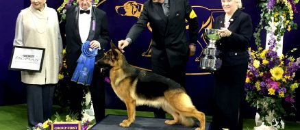 Westminster Kennel Club Dog Show Winners 2017