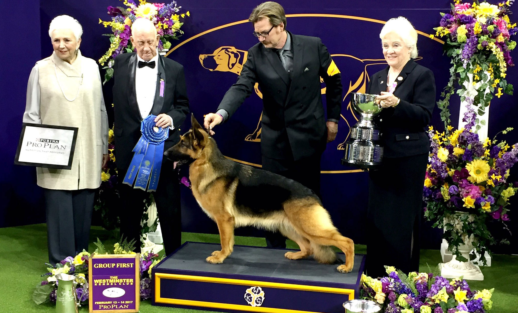 Westminster Dog Show 2017- herding winner - german shepherd