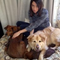 Aubrey Plaza's pet Stevie