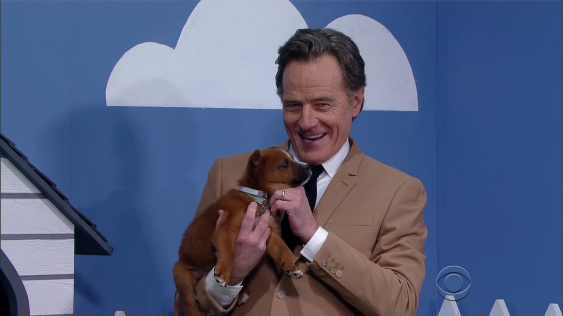 Bryan Cranston Puppies 1
