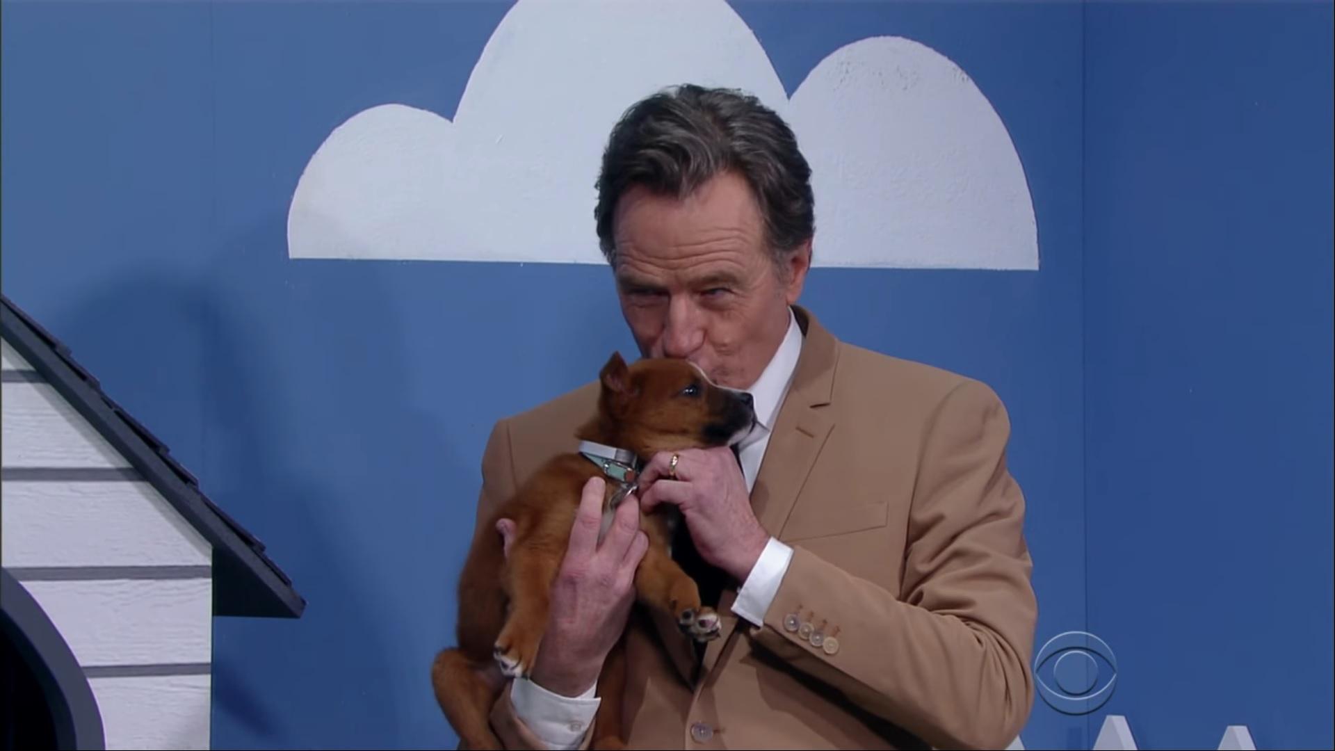 Bryan Cranston Puppies 2