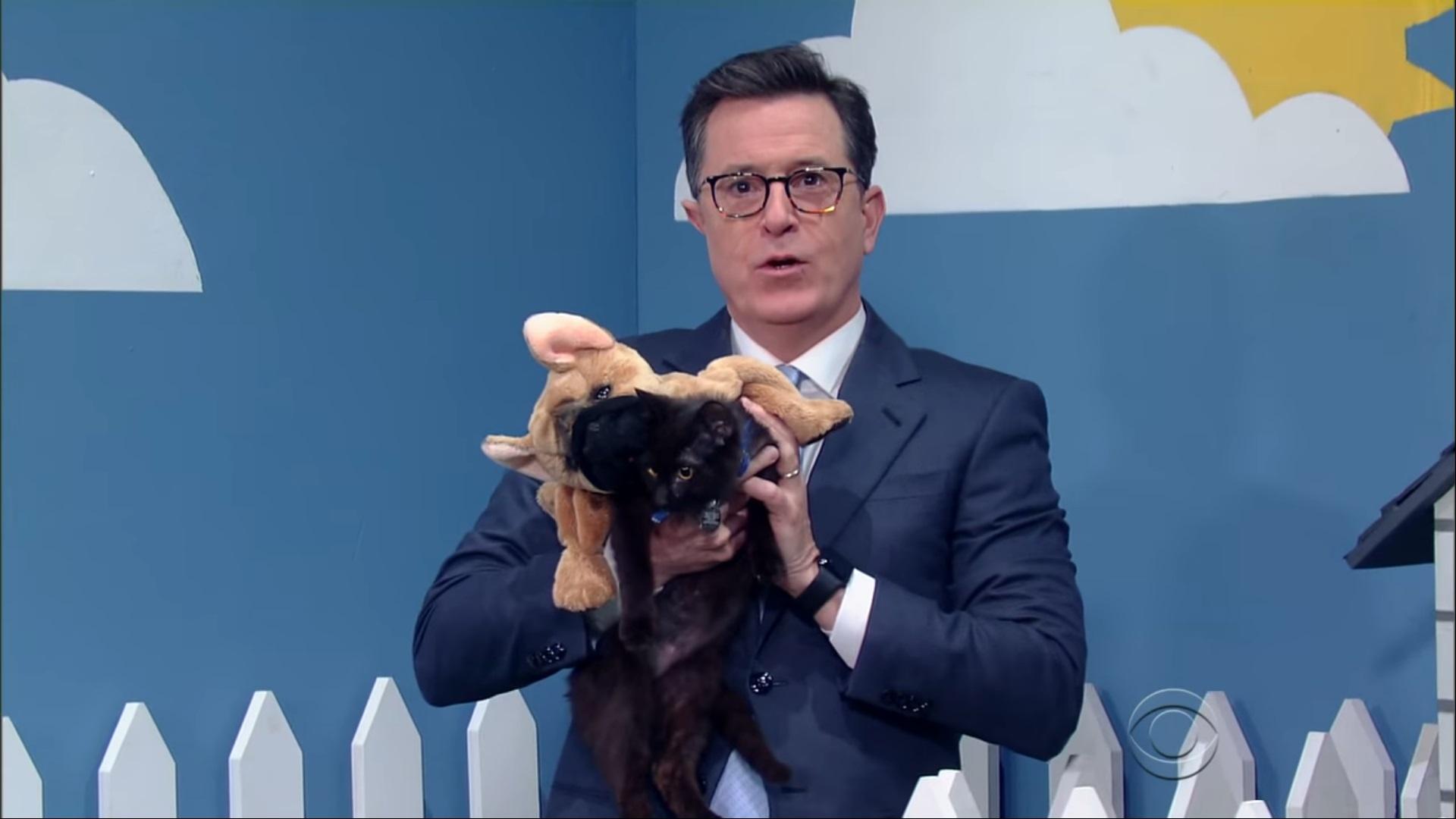 Bryan Cranston Puppies 3