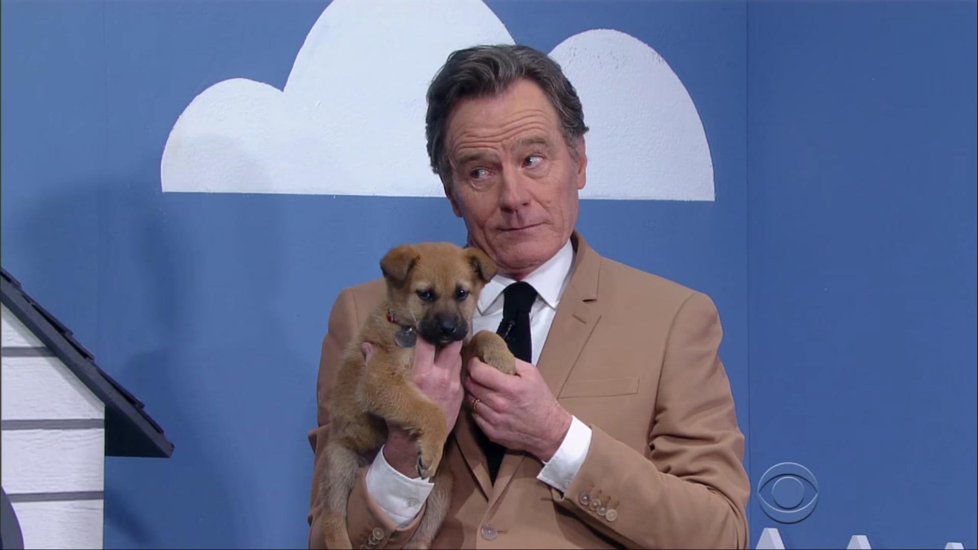 Bryan Cranston Puppies 4
