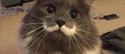 How a Feral Silicon Valley Cat Became Hamilton the Hipster Cat