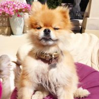Lisa Vanderpump's pet Harry
