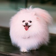 Lisa Vanderpump's pet Pink Dog