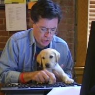 Stephen Colbert's pet Gipper