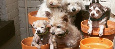 """Hero Accountant Runs a Pet  and Dog Retirement Home for """"Unadoptables"""""""
