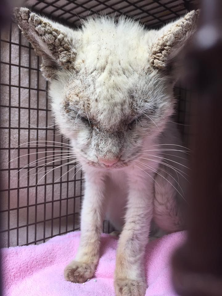 Blind Stray Cat Rescued and Healed, Revealing his Amazing Eyes