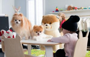 Boo the World's Cutest Dog Makes $20,000 a Week 