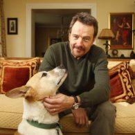 Bryan Cranston's pet Sugar