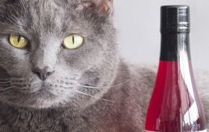 Cat Wine is a Thing Now and Your Cat Demands It