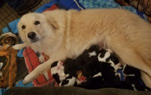 Daisy Dog Mom Rescues Puppies