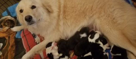 Doggie Mom Loses Puppies in Barn Fire, Finds Orphaned Pups to Adopt and Care For