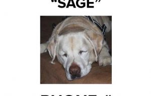 Sage the Blind dog rescued in the woods