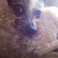 Chloe Grace Moretz's pet Bella