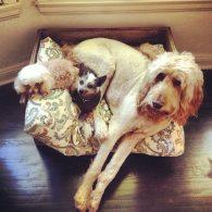 Chloe Grace Moretz's pet Fuller