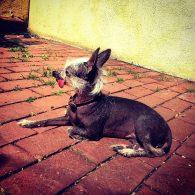 Chloe Grace Moretz's pet Missy