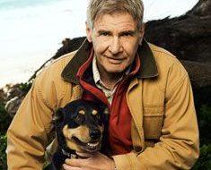 Harrison Ford – dog Kelpie - Celebrity Pet Worth