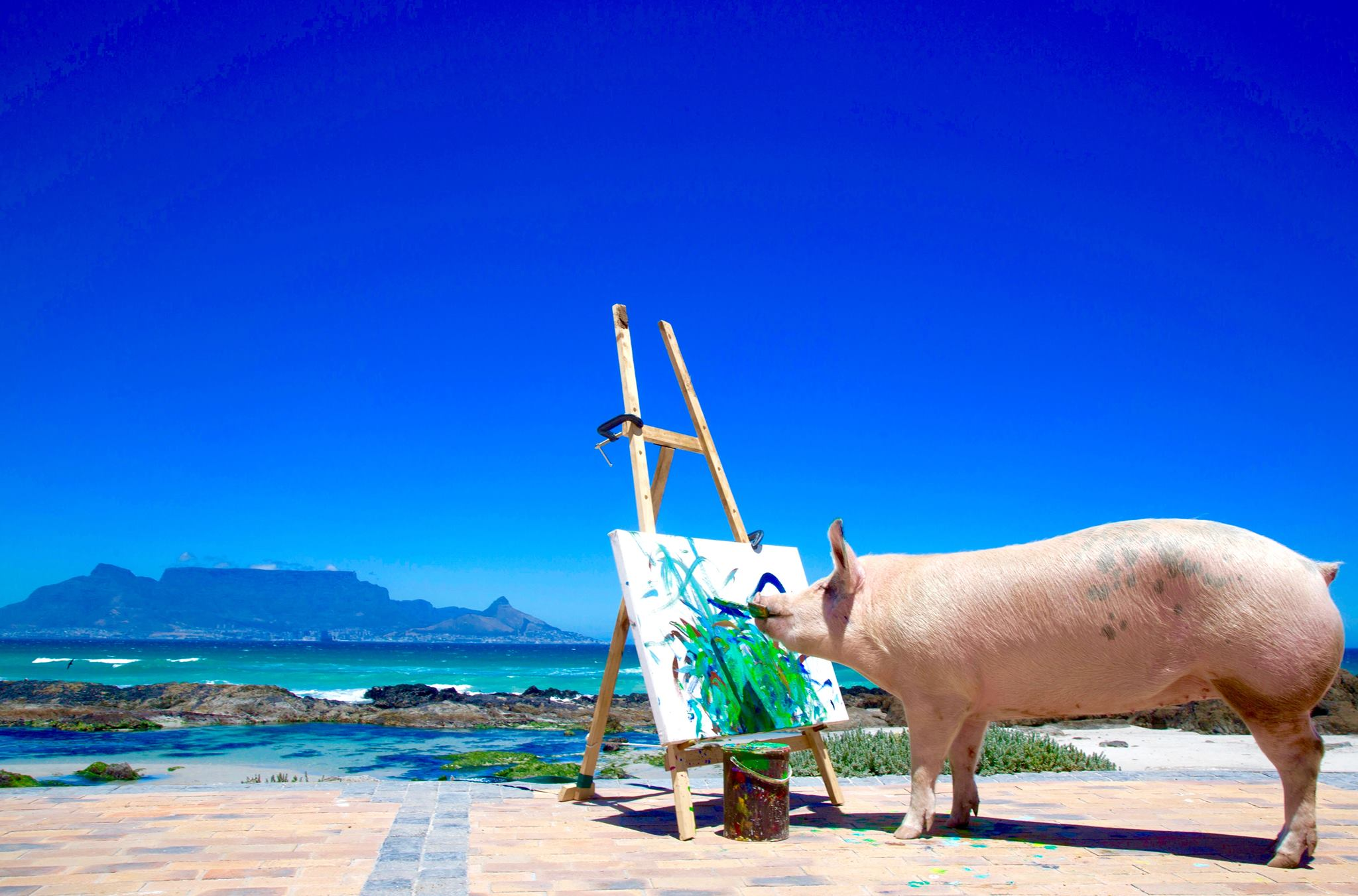 Pigcasso the Pig Paints to Support her Farm Sanctuary