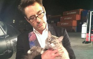 Robert Downey Jr. - cat - Dartanian
