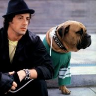 Sylvester Stallone's pet Butkus Stallone