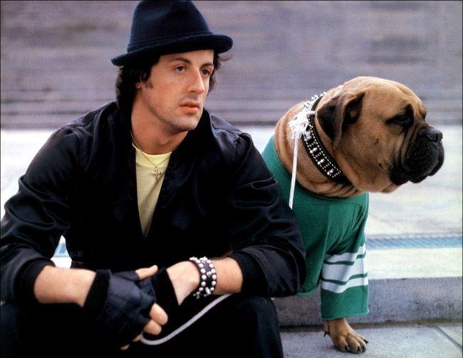 Sylvester Stallone - dog - Butkus Stallone