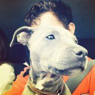 Tom Holland's pet Tessa