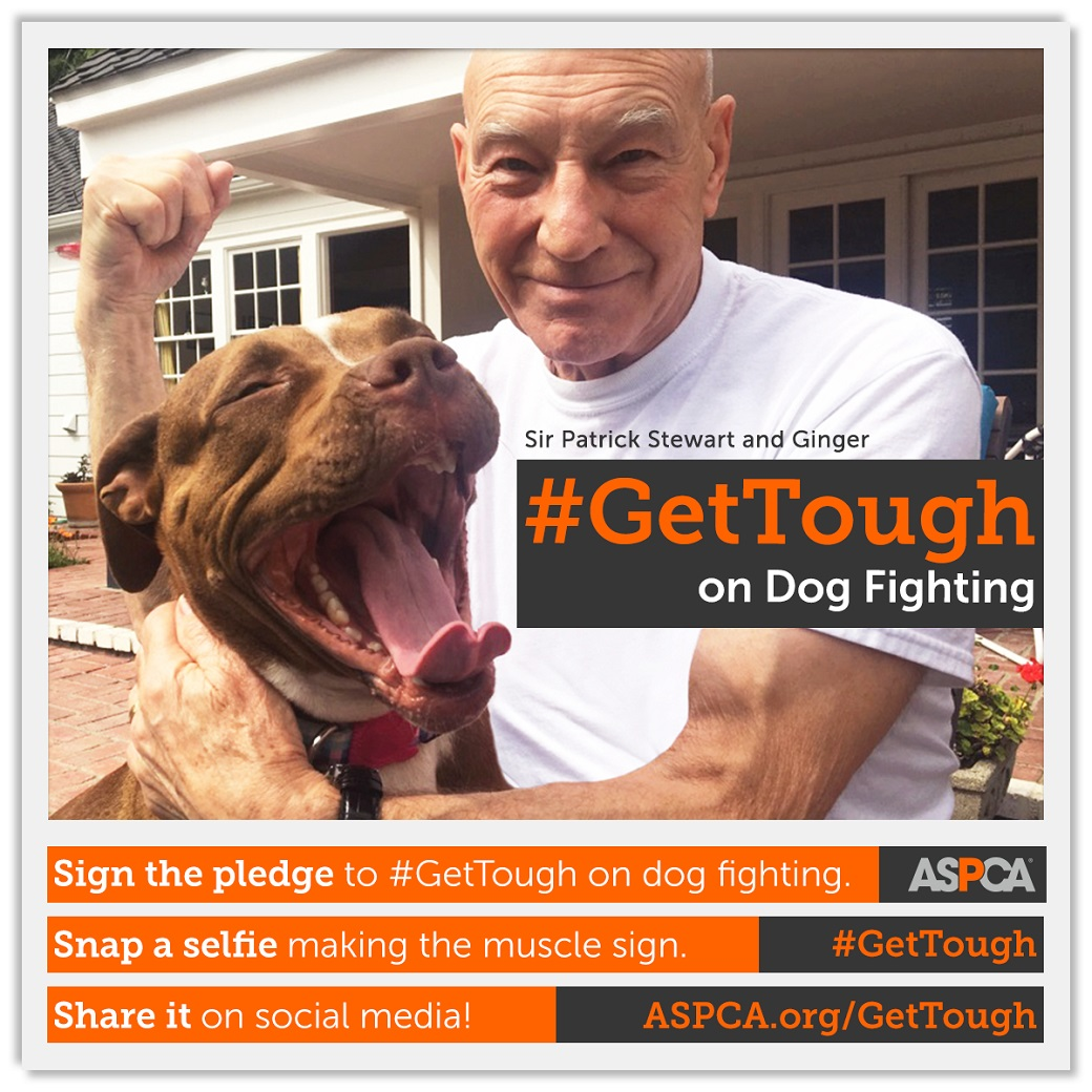 #GetTough on dog fighting - patrick-stewart