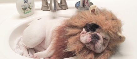 Manny the French Bulldog with 150,000 Fans and Snoop Dogg is One of Them