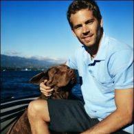 Paul Walker's pet Boone