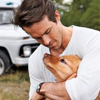 Ryan Reynolds' pet Baxter