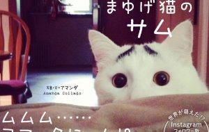 Sam the cat with eyebrows
