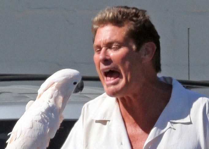David Hasselhoff Pets Celebrity Pet Worth